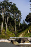 Rugged rocky oregon coast Royalty Free Stock Photo