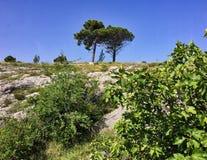 Rugged Roadside Terrain, Bosnia, Dalmation Coast. Rugged rocky terrain with sparse vegetation, on road from Bosnia to Montenegro, Dalmation Coast, Europe royalty free stock photo