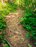 Rugged trail Stock Photography