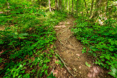Rugged trail Stock Images