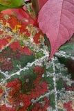 Ruggine dell'autunno immagine stock