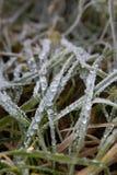 Rugiada congelata di mattina sulle foglie dell'erba immagine stock libera da diritti