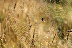 Rugiada della ragnatela dell'insetto Fotografia Stock Libera da Diritti