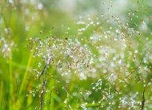 Rugiada di abbagliamento sull'erba verde Fotografia Stock
