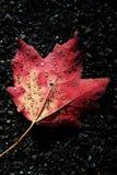 Autumn Dew fotografia stock