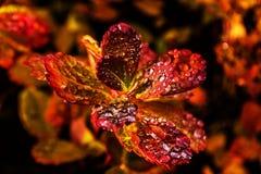Rugiada di autunno Fotografie Stock Libere da Diritti