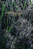 Rugiada di luminosità sull'erba di mattina fotografia stock
