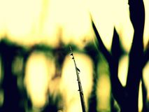 Rugiada di mattina allo stagno - innaffi l'iride fotografia stock
