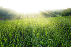 Rugiada di mattina nel sol levante dei raggi Immagini Stock