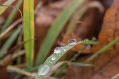 Rugiada di mattina su una lama di erba nel sottobosco fotografia stock
