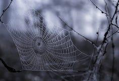 Rugiada di mattina sul Web di ragno Fotografie Stock Libere da Diritti