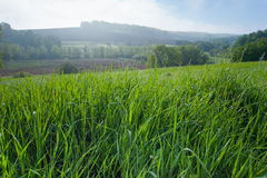 Rugiada di mattina sull'erba Fotografia Stock