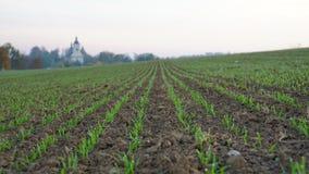 Rugiada di mattina sull'erba nel campo Immagini Stock Libere da Diritti