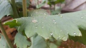 Rugiada dopo pioggia sulla foglia fotografia stock libera da diritti