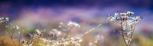 Rugiada e web sull'insegna asciutta delle piante Fotografia Stock
