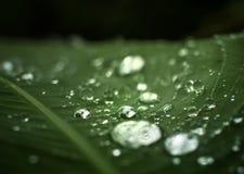 Rugiada luminosa sulla foglia verde Immagini Stock