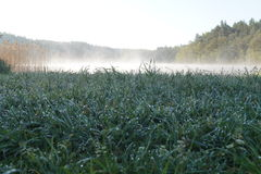 Rugiada nel lago Fotografie Stock