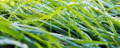 Rugiada nell'erba Fotografia Stock