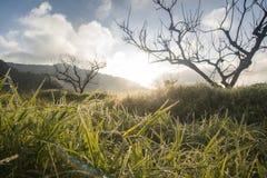 Rugiada su stile basso dell'albero e dell'erba Fotografie Stock