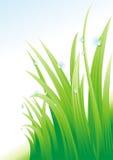 Rugiada su un'erba. Immagini Stock Libere da Diritti