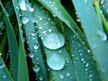Rugiada sul primo piano dell'erba verde Fotografia Stock