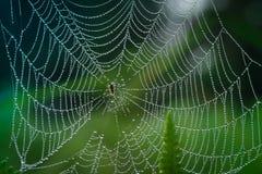 Rugiada sul ragno nella mattina Fotografia Stock