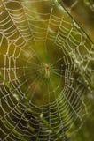 Rugiada sul Web di ragno Fotografie Stock Libere da Diritti