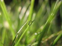 Rugiada sull'erba Fotografia Stock Libera da Diritti