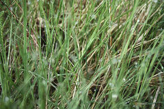 Rugiada sull'erba Fotografie Stock