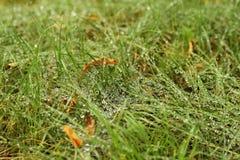 Rugiada sull'erba Immagini Stock Libere da Diritti