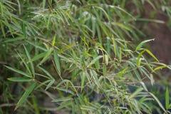 Rugiada sull'erba verde Immagini Stock Libere da Diritti