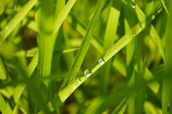 Rugiada sull'erba verde di mattina fotografia stock