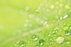 Rugiada sulla foglia verde Fotografia Stock