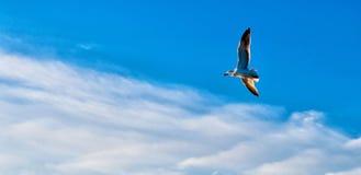Rugido en el cielo Fotografía de archivo