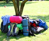 Rugzakken van Padvinders rond de boom tijdens een excursie 2 Stock Fotografie