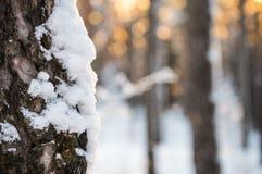 Ruhe des Holzes Lizenzfreies Stockbild