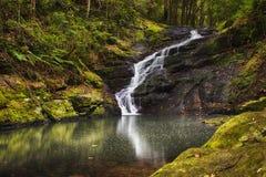 Ruhe fällt am Buderim-Regenwald-Park stockfoto