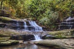 Ruhe fällt am Buderim-Regenwald-Park lizenzfreies stockbild