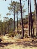 Ruhe im Wald Stockbild