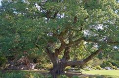 Ruhebank under trädet Arkivbild