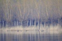 Ruhig Fluss stockbilder