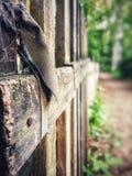 Ruhig lebens- umweltfreundliches Holz des Dorfs lizenzfreies stockfoto