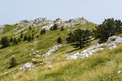 Ruhige Alpenwiese mit breiten Gebirgsbäumen in Nationalpark Biokovo in Kroatien Lizenzfreie Stockfotos
