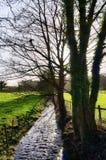 Baum gezeichneter Strom in Cartmel, Cumbria Lizenzfreies Stockfoto
