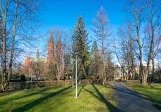 Ruhige Gasse des Stadtparks mit Laterne, Tannen und anderen Bäumen in Tarnow, Polen lizenzfreies stockbild