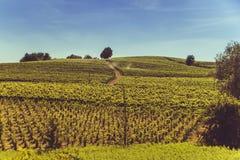 Ruhige Hügel und wilde Weinberge Stockfotos