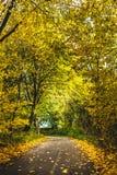 Ruhige herbstliche Gasse mit Bäumen lizenzfreie stockfotografie