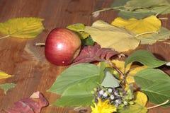 Ruhige Herbstzeit, ein Apfel unter dem Laub lizenzfreie stockfotos
