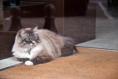 Ruhige Katze Lizenzfreie Stockfotografie