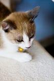 Ruhige Katze Stockbild
